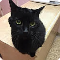 Adopt A Pet :: Maya - Indianapolis, IN