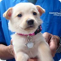 Adopt A Pet :: Betsy - Wharton, TX