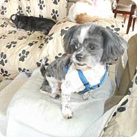 Adopt A Pet :: JORDAN (LM) - Tampa, FL