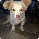 Adopt A Pet :: Outstanding Oso