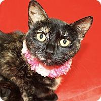 Adopt A Pet :: Solo - Jackson, MI