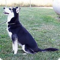 Adopt A Pet :: Tasha - Harvard, IL