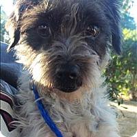 Adopt A Pet :: Baby - Encino, CA