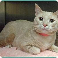 Adopt A Pet :: BILL - Marietta, GA