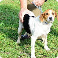 Adopt A Pet :: Trish - Kendall, NY