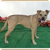 Shepherd (Unknown Type) Mix Dog for adoption in Marietta, Georgia - MIN SEE ALSO ROXY