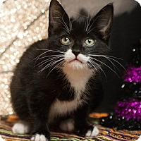 Adopt A Pet :: Ace - Muskegon, MI
