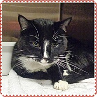 Adopt A Pet :: LONGWAY - Marietta, GA