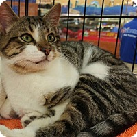 Adopt A Pet :: RIZZO - Powder Springs, GA