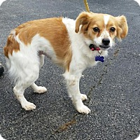Adopt A Pet :: Dolly - Lexington, KY