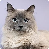 Adopt A Pet :: KINGSTON - Royal Oak, MI