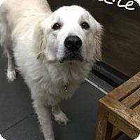 Adopt A Pet :: Sadie Lew - Kyle, TX