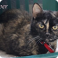Adopt A Pet :: Pepper - Bradenton, FL