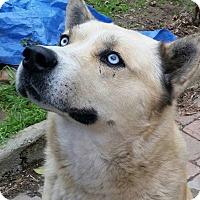Adopt A Pet :: LOBO - Santa Clarita, CA