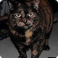 Adopt A Pet :: Chloe - N. Berwick, ME