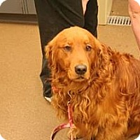 Adopt A Pet :: Brody - Denver, CO