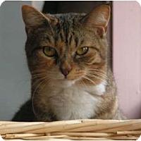Adopt A Pet :: Tallulia - Monroe, GA