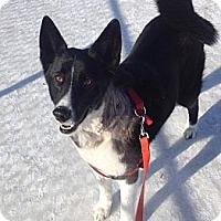 Adopt A Pet :: Zeppelin - Saskatoon, SK