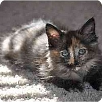 Adopt A Pet :: Tinkerbell - Modesto, CA