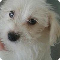 Adopt A Pet :: SNOW - Silver Lake, WI
