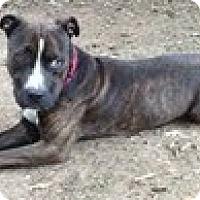 Adopt A Pet :: Zach - Justin, TX