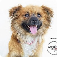 Adopt A Pet :: Arizona - Phoenix, AZ