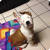 Adopt A Pet :: Keller - Miami, FL