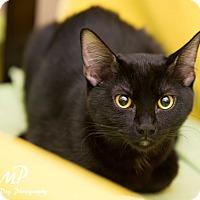 Adopt A Pet :: Jenni - Fountain Hills, AZ