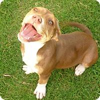 Adopt A Pet :: Mocha - Parker, CO