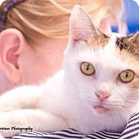 Adopt A Pet :: Annie - Homewood, AL