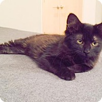 Adopt A Pet :: River - Broomall, PA