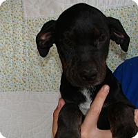 Adopt A Pet :: Mikey - Oviedo, FL