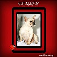 Adopt A Pet :: Shimmer - Alabaster, AL