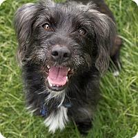 Adopt A Pet :: MacDuff - Drumbo, ON