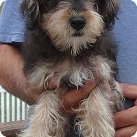 Adopt A Pet :: FRITZ - Wheeling, WV