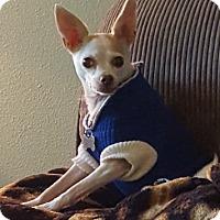 Adopt A Pet :: Chloe - McKenna, WA