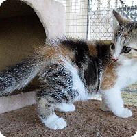 Adopt A Pet :: Harley - Van Wert, OH