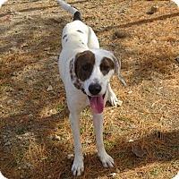 Hound (Unknown Type) Mix Dog for adoption in Delaware, Ohio - Billie Jean