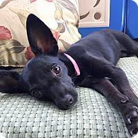 Adopt A Pet :: Binx - San Diego, CA