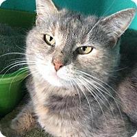 Adopt A Pet :: Athena - Breinigsville, PA