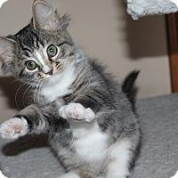 Adopt A Pet :: Tia - Naperville, IL