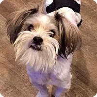 Adopt A Pet :: Montana - Rockville, MD