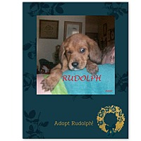 Adopt A Pet :: RUDOLPH - Ventnor City, NJ
