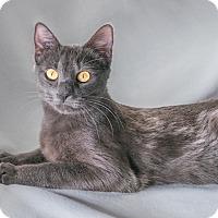 Adopt A Pet :: Kira - Vancouver, BC