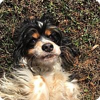 Adopt A Pet :: Alexis -PENDING - Kannapolis, NC
