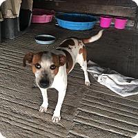 Adopt A Pet :: Tessie - Cuero, TX
