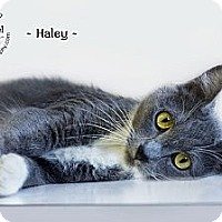 Adopt A Pet :: Haley - Phoenix, AZ