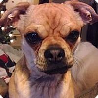 Adopt A Pet :: Ace - Austin, TX