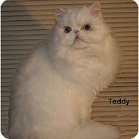 Adopt A Pet :: Teddy - Portland, OR