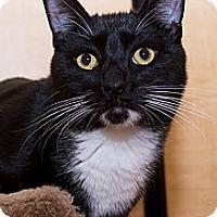Adopt A Pet :: Ricky - Irvine, CA